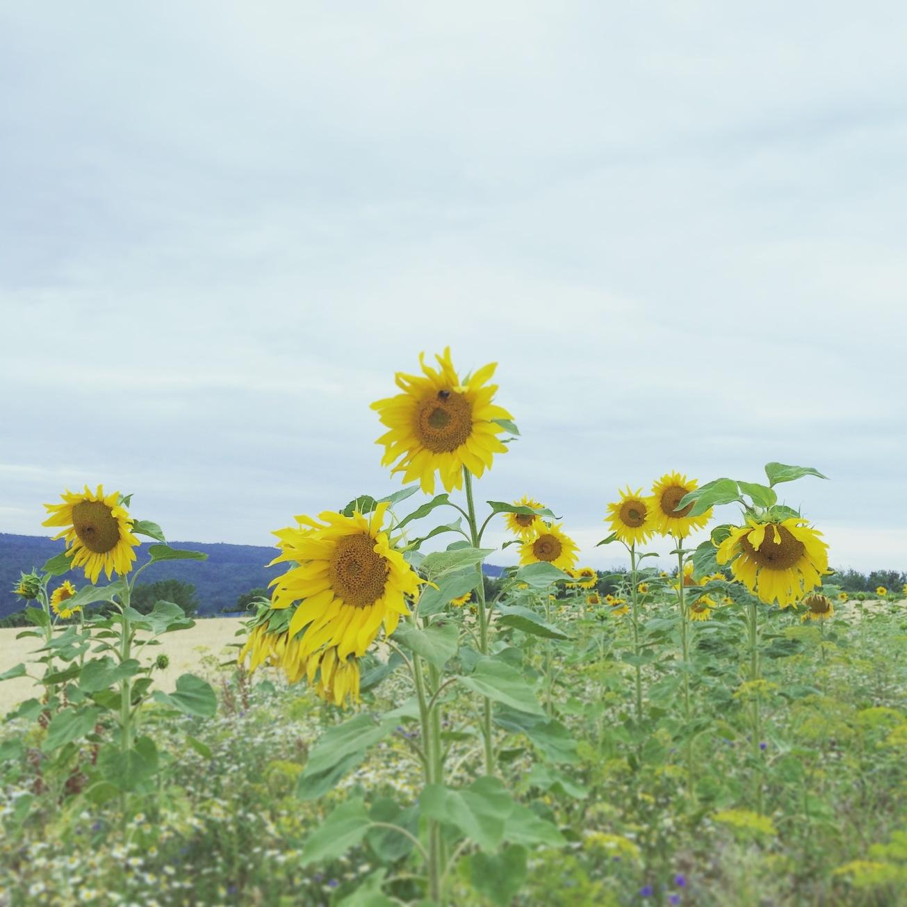 Photo 01-08-15 16 10 26